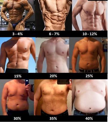 Pourcentages de graisse